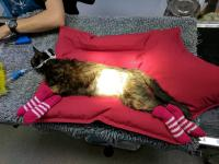 The RSPCA is calling on knitters to put their skills to use this Wool Week by whipping up leg warmers for sick kittens, snuggly nests for baby hedgehogs and jumpers for chilly dogs.