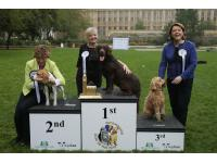 Westminster Dog of the Year Finalists