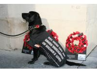 Julia Robertson's dog Molly at the Menin Gate in Ypres for War Dogs Remembered.