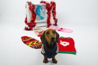 To support Save the Children's Christmas Jumper Day, BorrowMyDoggy has teamed up with the charity to organise the most 'pawsome' event of the year.