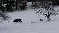Buddy and Mischief having fun in the snow.
